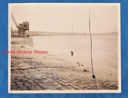 Photo Ancienne Snapshot - Port à Situer - Petit Chien Au Bord De L'eau - Trace De Bris De Vitre Du Négatif - Boats