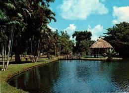 CPM - ILE MAURICE - Le Jardin De Pamplemousses  ... - Mauritius