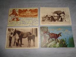 Beau Lot 60 Cartes Postales D' Animaux  Animal         Mooi Lot Van 60 Postkaarten Van Dieren  Dier  - 60 Scans - Cartes Postales