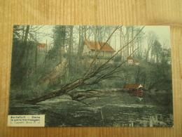Boitsfort Parc Verhaegen Perfecte Coloré - Watermaal-Bosvoorde - Watermael-Boitsfort