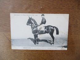 GROS LOT,BAI,NE EN 1906,PAR PRINCE NOIR ET BRETAGNE,PAR NOVICE-SUPPLEMENT A LA FRANCE CHEVALINE N°49-1909 - Pferde