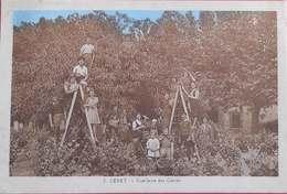 66 Ceret 1945 Cueillette Des Cerises TB Animée éditeur Aspart N°2 Ceret Dos Scanné - Ceret