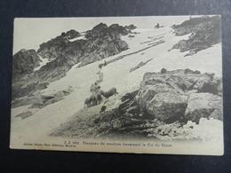 19971) TROPEAU DE MOUTONS LE COL DU GEANT NON VIAGGIATA  OTTIMO STATO - Chamonix-Mont-Blanc