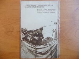 CPA Les Pigeons Voyageurs De La Marine Britannique- Officier De Sous-marin Envoyant Une Dépêche Par Pigeon Voyageur - War 1914-18