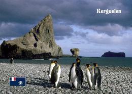 TAAF Kerguelen Islands Penguins Indian Ocean New Postcard Antarktis AK - TAAF : French Southern And Antarctic Lands