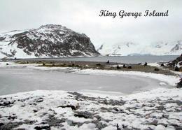 Antarctica King George Island New Postcard Antarktis AK - Altri