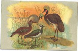 W4297 Oiseaux Uccelli Birds - Illustrazione Illustration / Non Viaggiata - Uccelli