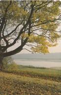 LITUANIA. CHIP. Autumn. LT-LTV-C078. (049). - Lituania