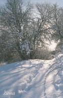 LITUANIA. CHIP. Winter. LT-LTV-C080. (048). - Lituania
