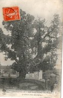 LA POSTOLLE  ( 89 ) - Son Vieux Tilleul - Other Municipalities