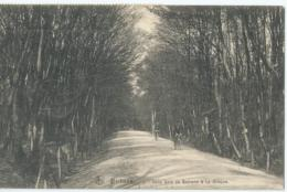 Bethane - Sous Bois De Bethane à La Gileppe - 1913 - Limburg