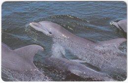ZAMBIA A-081 Magnetic Telecom - Animal, Sea Life, Dolphin - FAKE - Zambia