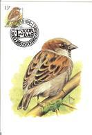 MC BUZIN / Moineau Domestique / Huismus / Passer Domesticus / House Sparrow / Haussperling,  1994 - Uccelli Canterini Ed Arboricoli