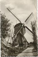 CPSM - HOLLANDSE MOLEN ... - Pays-Bas