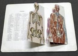 Medicina - Pop-Up  Atlas Anatomique Du Docteur Vermot - 1900 Ca. - Libros, Revistas, Cómics