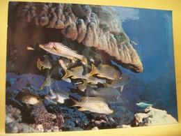 B21 4724 CPSM GM. 1974 DJIBOUTI. FEERIE SOUS-MARINE TROPICALE. CONCENTRATION DE GATERIN GATERINUS SOUS UN CORAIL PORITES - Pescados Y Crustáceos