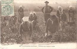 Dépt 29 - PLOUGASTEL-DAOULAS - Cueillette Des Fraises à L'aube - Collection Villard N° 399 - Plougastel-Daoulas