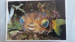 CPM POISSON PORC EPIC  AQUARIUM DE LA ROCHELLE ED COUTANT  PHOTO  AQUARIUM N° 25 - Pesci E Crostacei