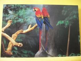 B21 4780 CPM - CANADA. ARA ROUGE / SCARLET MACAW. - Oiseaux