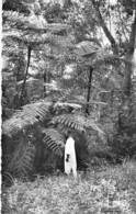 AFRIQUE NOIRE - GUINEE FRANCAISE Fougères Arborescentes - CPSM Dentelée N/B PF Africa ARBRE Tree Bome Boom Albero árbol - Guinée Française