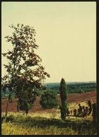 Vogelbeerbaum / Lüneburger Heide  -  DJH-Ansichtskarte  Ca.1975     (11575) - Bäume