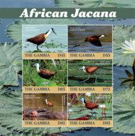 Gambia 2019  Fauna ,bird   African Jacana   I201901 - Gambia (1965-...)