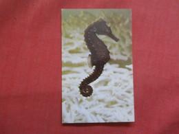 Female Atlantic Seahorse   -ref    3550 - Fish & Shellfish