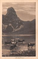 Lac De Lovenex - Lac Tanay - Troupeau De Vaches - Torreau - VS Wallis