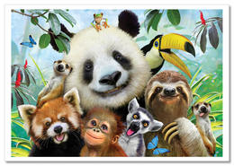 FUNNY WILD ANIMAL PANDA SLOTH Monkey Coala Lemur New Postcard - Non Classificati