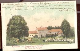 Cpa Lanklaer    Moutons Et Vaches  1906 - Dilsen-Stokkem