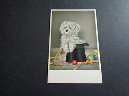 Chien ( 331 )  Hond  ( Blanco Au Verso - Voir Scan )   1719 - Chiens