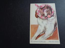Chien ( 341 )  Hond - Chiens