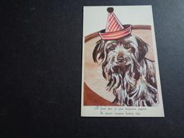 Chien ( 342 )  Hond - Chiens