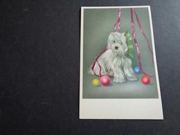Chien ( 346 )  Hond - Chiens