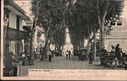 ! Old Postcard Madeira 1905 - Madeira