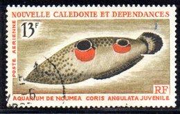 APR2193 - NUOVA CALEDONIA 1965 , Posta Aerea Yvert N. 81  Usato  (2380A) - Posta Aerea