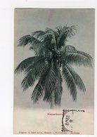 INDONESIE  -  Klapperboom - Indonésie