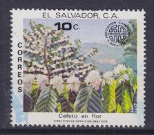 El Salvador 1979 Mi. 1305     10 C Kaffeepflanzer-Vereinigung Blühende Kaffeeständer Floering Coffee Bushes - El Salvador
