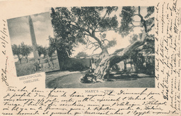 704/29 - EGYPT Ancient Multiple Views Card HELIOPOLIS , MARY'S TREE , Editor Not Mentioned - Used CAIRE 1901 To France - Autres