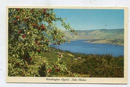 USA - AK 359737 Washington - Apples - Lake Chelan - Estados Unidos