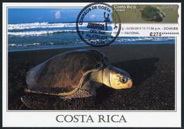 COSTA RICA - Carte Maximum Card - ATM - Tortuga Lora / Lora Turtle (Lepidochelys Olivacea), Tortue Marine - Costa Rica
