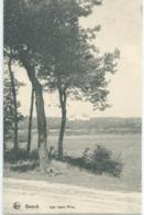 Genk - Genck - Les Vieux Pins - Edition Maison Lowis Genck - 1919 - Genk