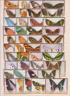 Lot Timbres Papillons (1) - Briefmarken
