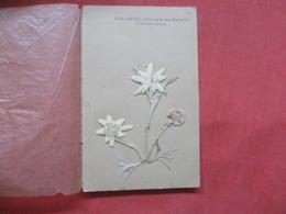 Edwlweiss Immortelle Des Glaciers  - -ref    3551 - Flowers