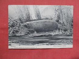 Platypus  Birds & Animals Of Australia   -ref    3551 - Other