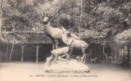 44 - NANTES - Le Jardin Des Plantes - Le Cerf, La Biche Et Le Faon - Nantes