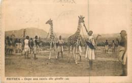 Afrique - ERYTHREE - ERITREA - Dopo Una Caccia Alle Giraffe 1924 - See Stamps - Eritrea