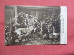 Bremen Museum--- Aus Der Heimischen Tierwelt       -ref    3552 - Museum