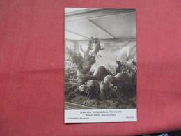 Bremen Museum--Aus Der Heimischen Tierwelt   -ref    3552 - Museum