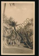 Tozeur - Dans L'Oasis [AA44 3.223 - Tunisia